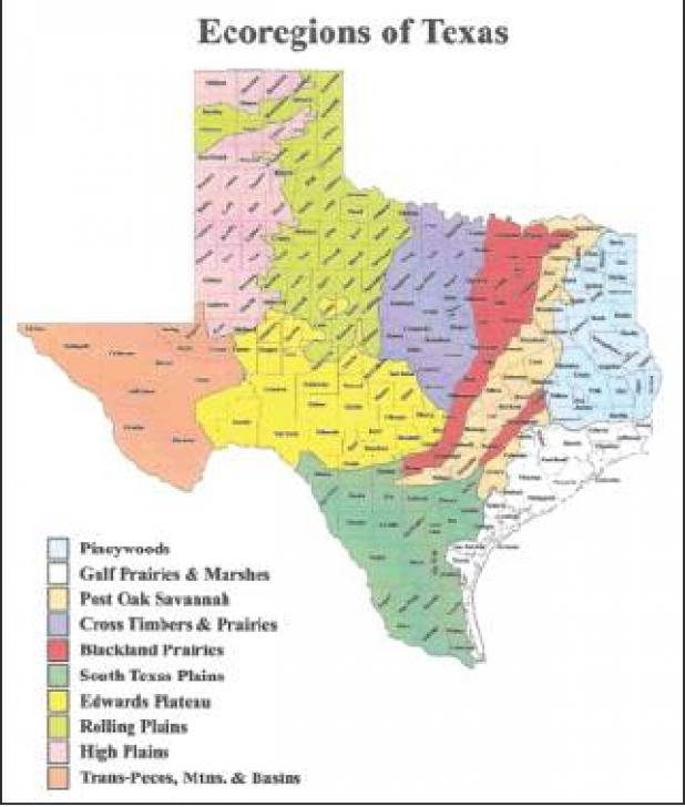 North, East, and South Texas Deer Forecast