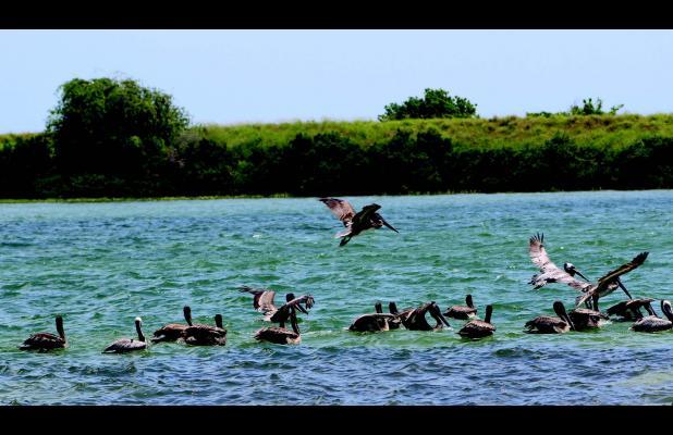 Fishing for food aransas pass progress for Aransas pass fishing